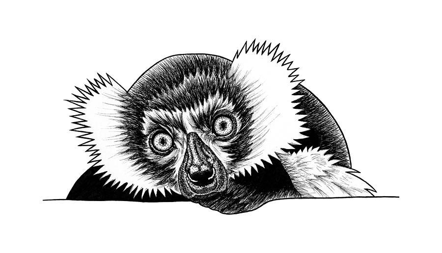 Lemur Drawing - Black And White Ruffed Lemur 1 by Loren Dowding