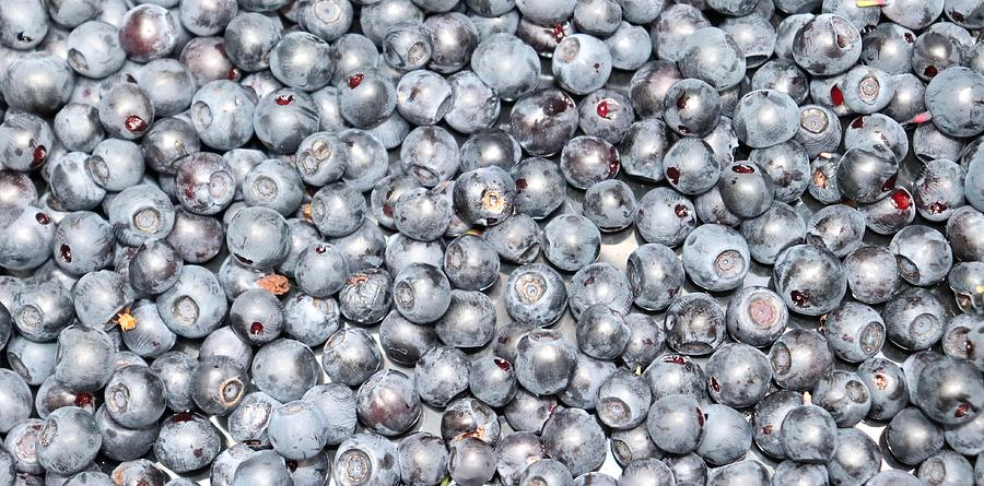 Blueberries Photograph - Blueberries by Maria Jansson