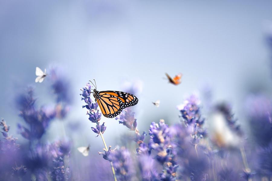 Butterflies Photograph by Borchee