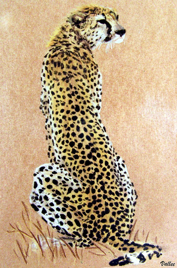 Cheetah Pastel - Cheetah by Vallee Johnson