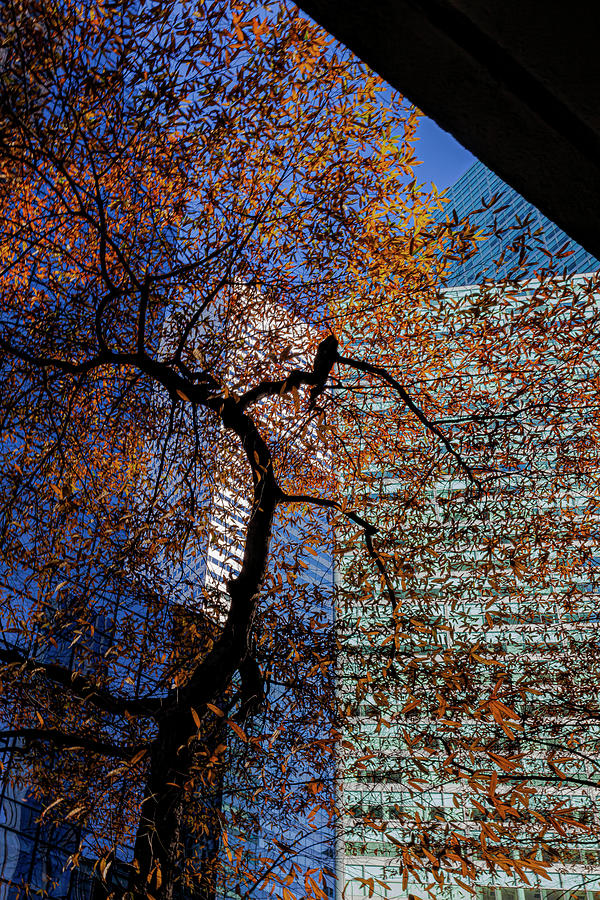 Citicorp Center and Fall Tree by Robert Ullmann