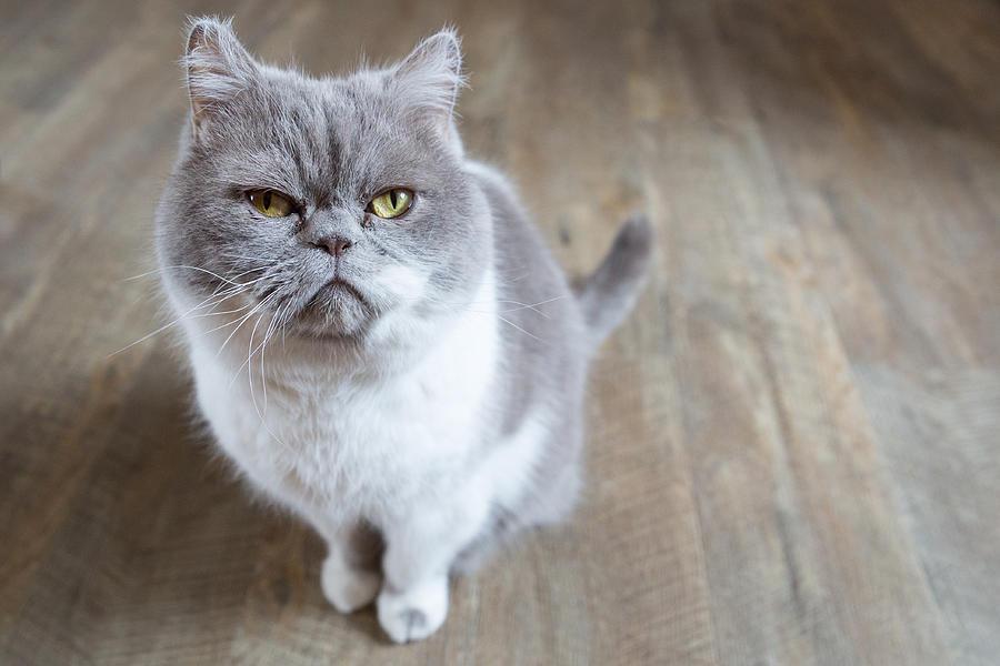 Close-Up Of Cat Photograph by Anke Wittkowski / EyeEm