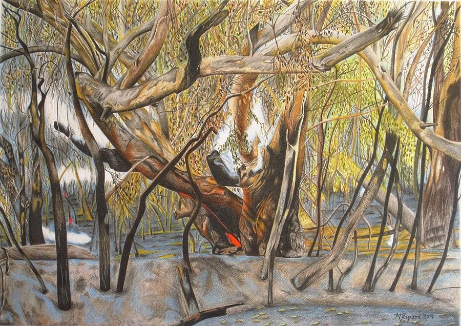 Gum Tree Drawing - Death Of A Gum Tree by Michelle Ripari
