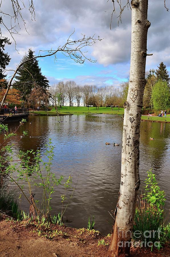 Duck Pond Hillsboro Oregon Photograph By Beautiful Oregon