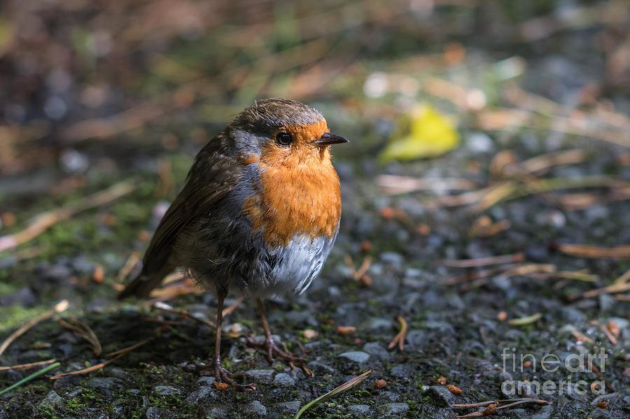 Early Morning Visitor by Eva Lechner