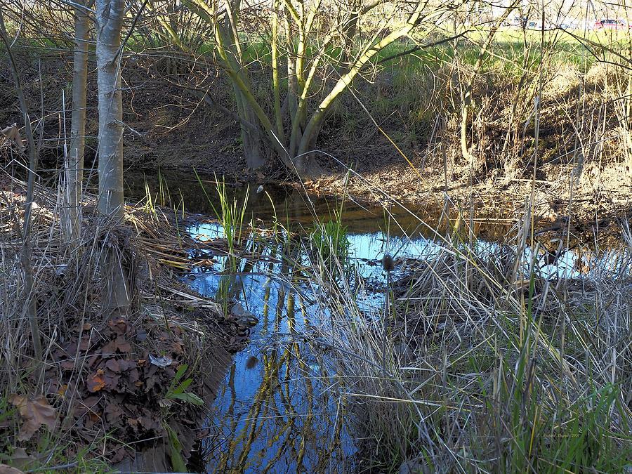 Edgewater Creek by Richard Thomas
