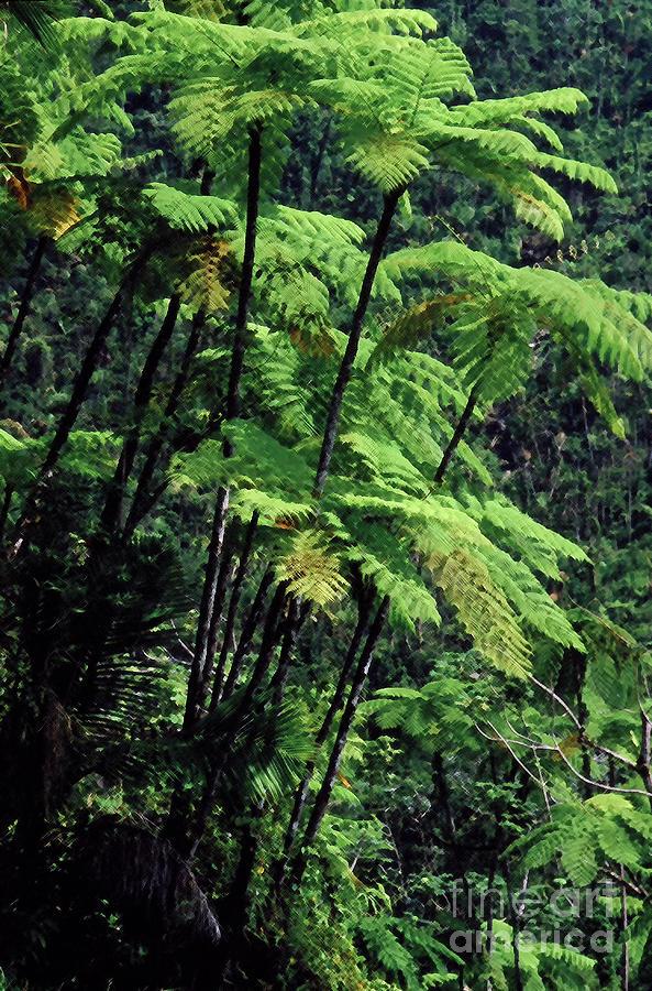 El Yunque Tree Ferns by Thomas R Fletcher