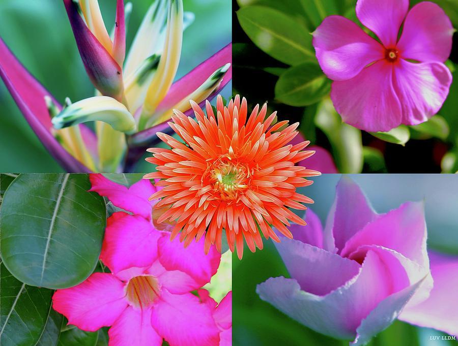 Flowers Photograph