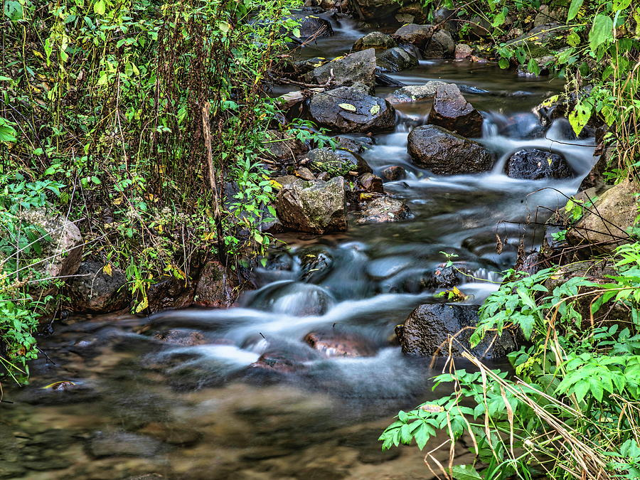 Flowing Stream In The Wild Photograph
