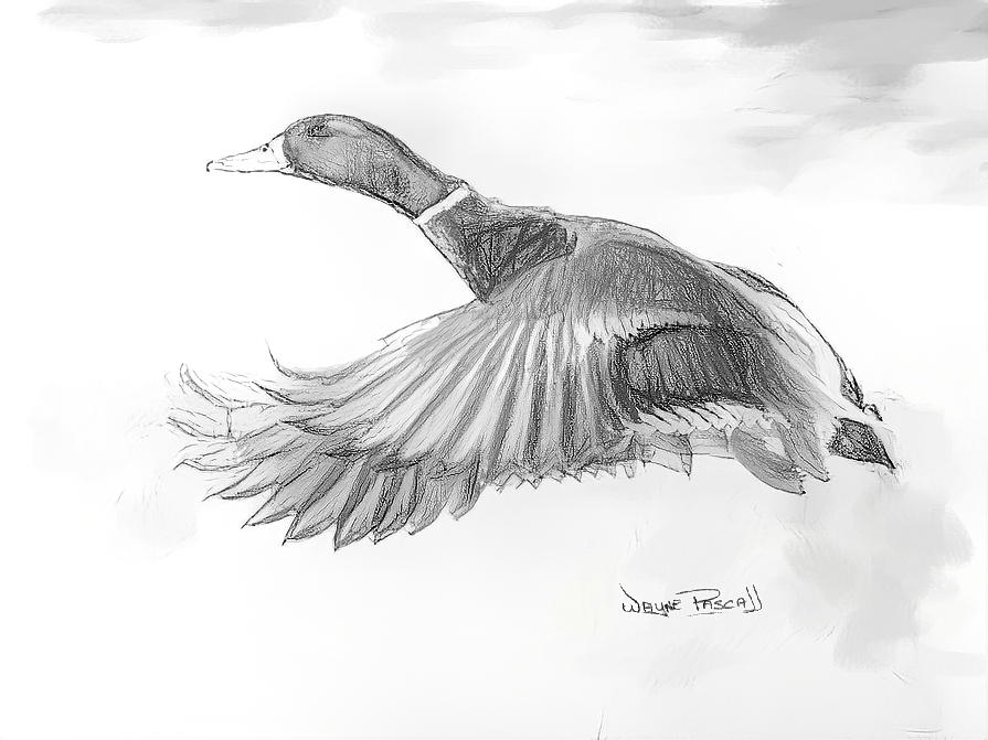 Flying Duck by Wayne Pascall