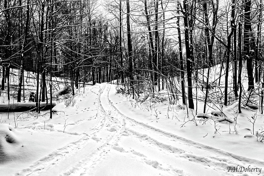 Fork In The Winter Trail Photograph