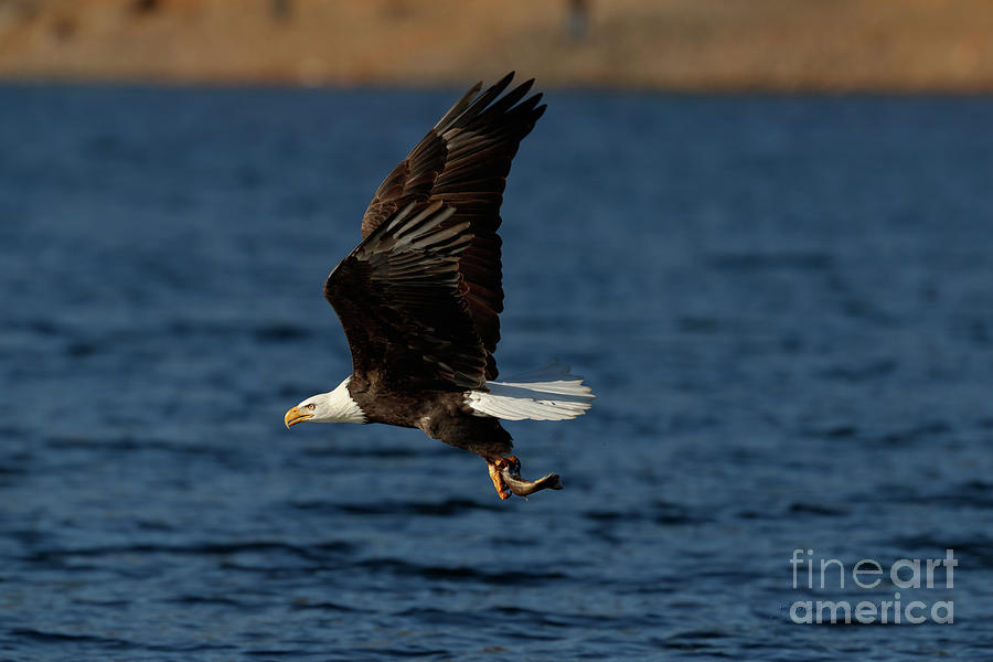 Fresh Catch by Beve Brown-Clark Photography