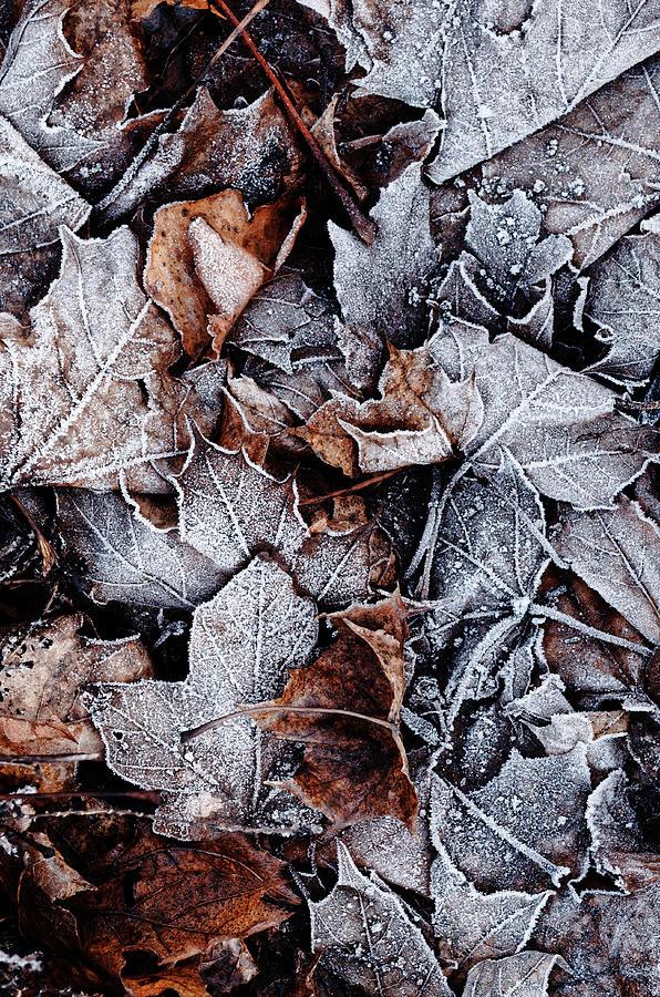 Frosty Photograph