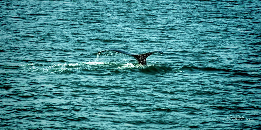 Whale Photograph - Goodbye by Mike Braun