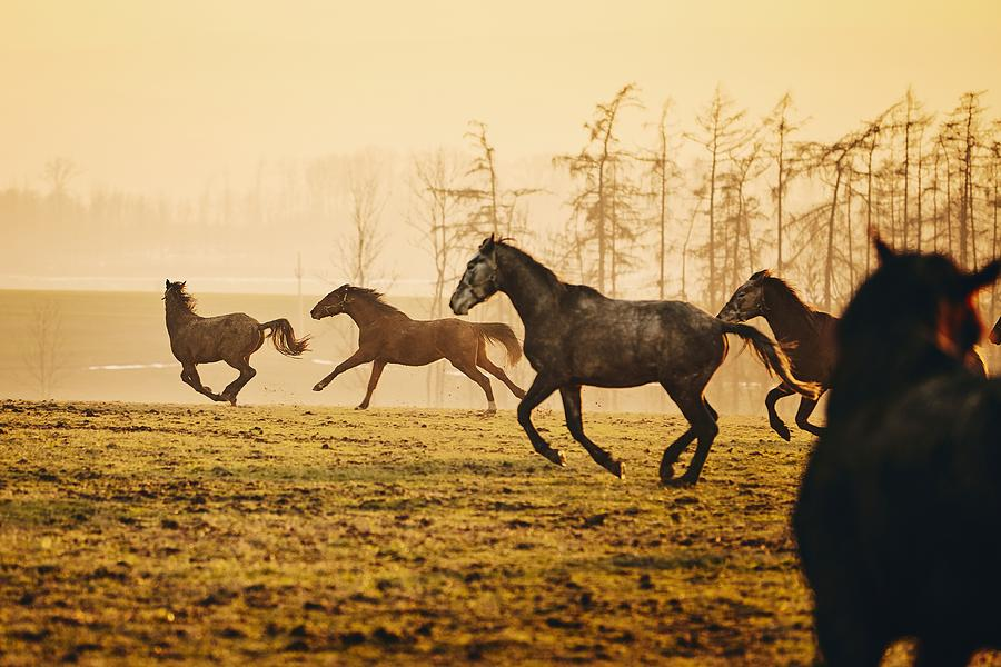 Horse Photograph - Herd Of Horses At Sunset 1 by Jaromir Chalabala