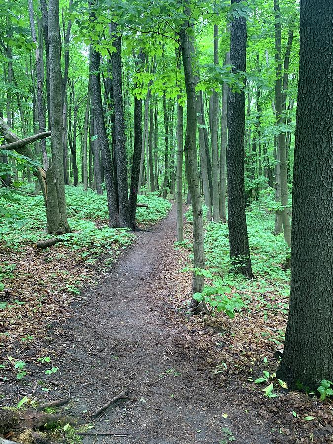 Hike In The Woods Photograph