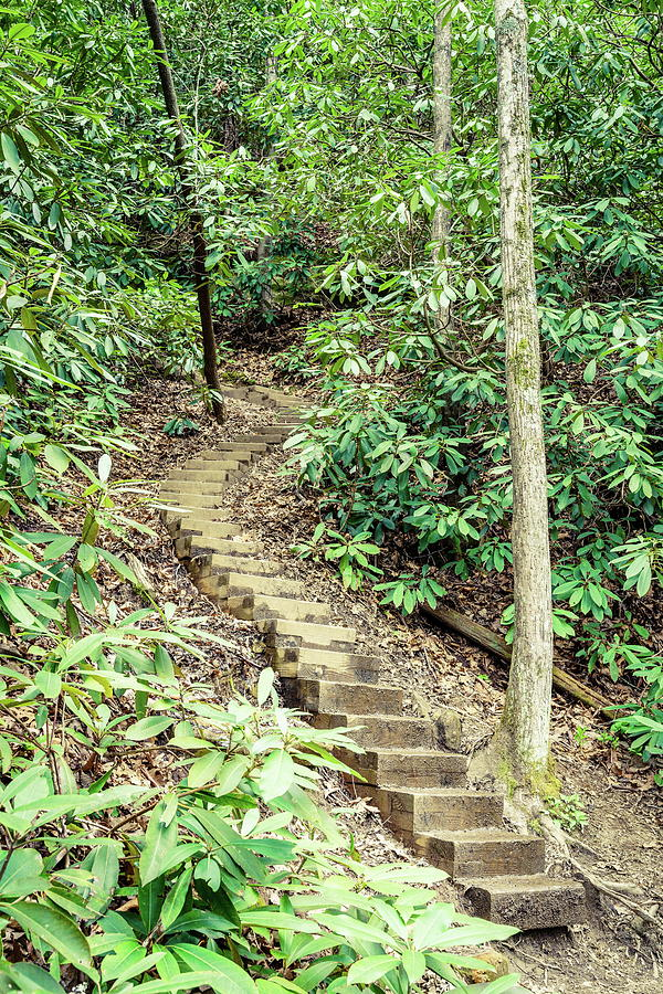 Hiking Trail In Red River Gorge Photograph