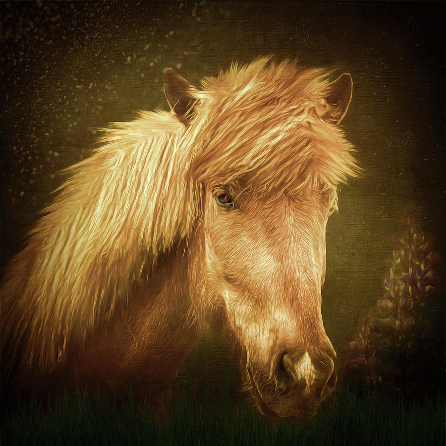 Icelandic Horse by Maggy Pease