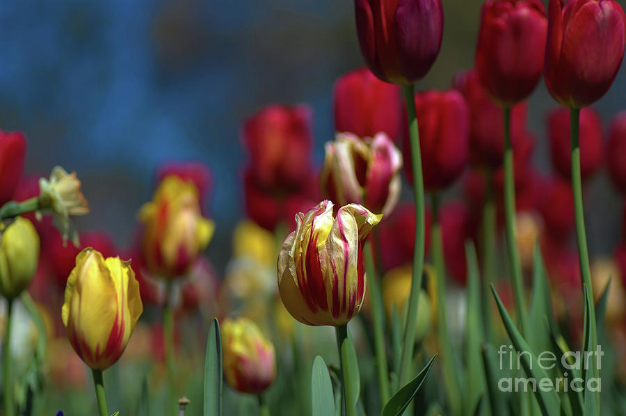 In the Middle by Diana Mary Sharpton