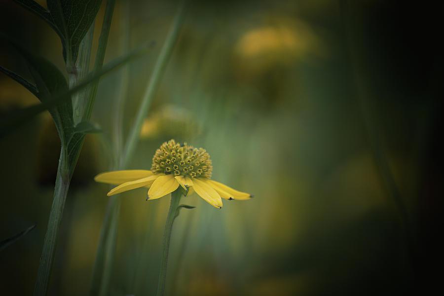 Isolation Photograph