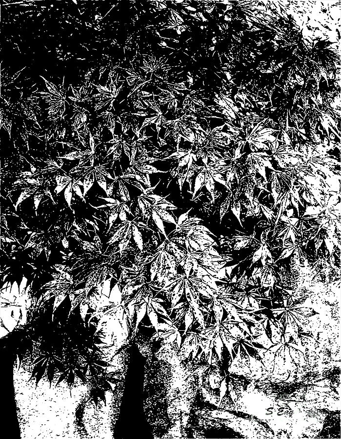 Japanese Maple In Pot Black And White Drawing