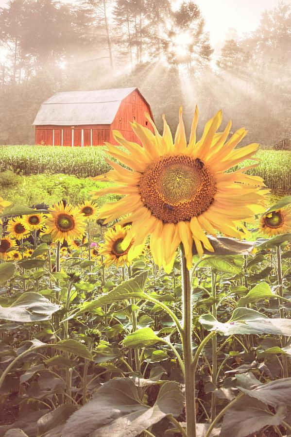 Joy in Country Colors by Debra and Dave Vanderlaan