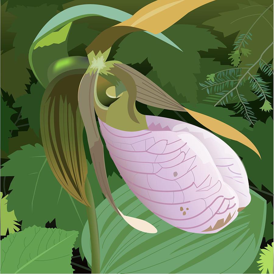 Wildflower Digital Art - Lady Slipper by Marian Federspiel