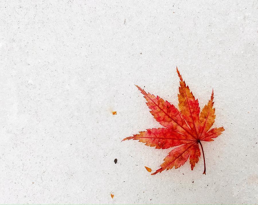 Last Leaf by Steph Gabler