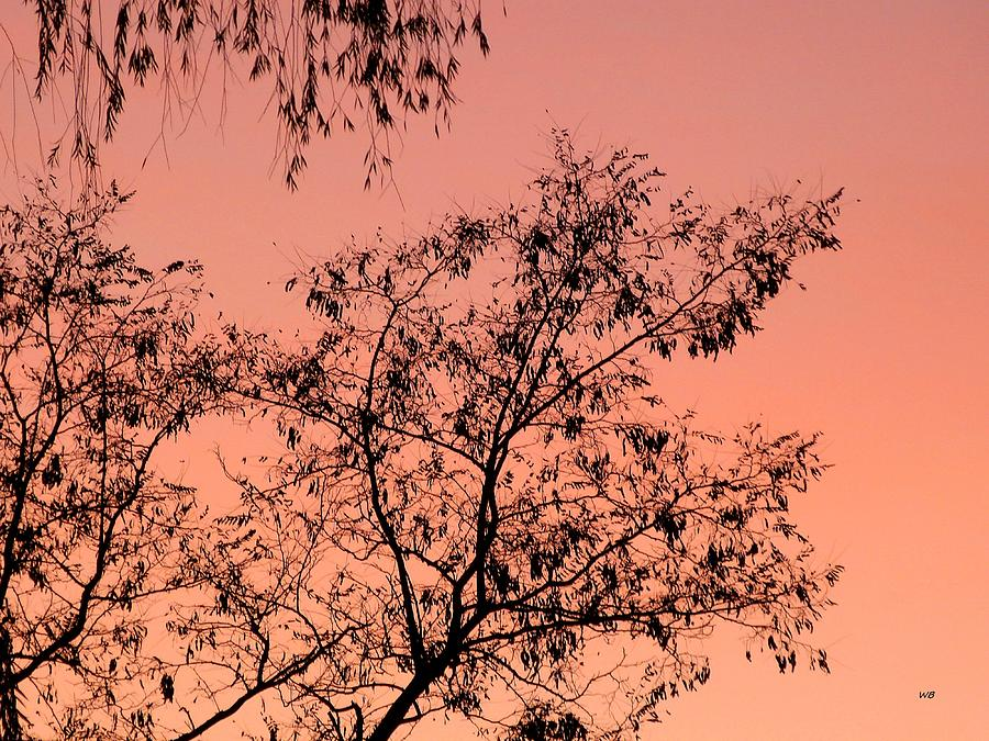 Late October Silhouettes by Will Borden