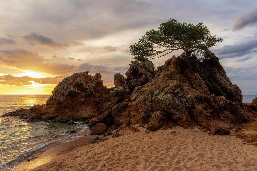 Lonely tree at sunrise on the beach of Fenals, Lloret de Mar by Vicen Photography