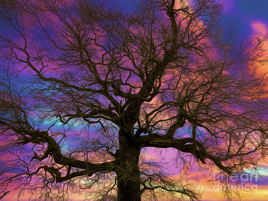 Tree Photograph - Looking Up by Leigh Kemp