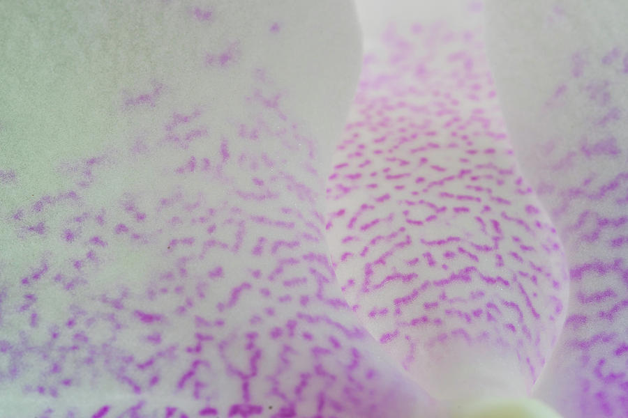 Macro Of Pink And White Spotted Orchid Petals Photograph