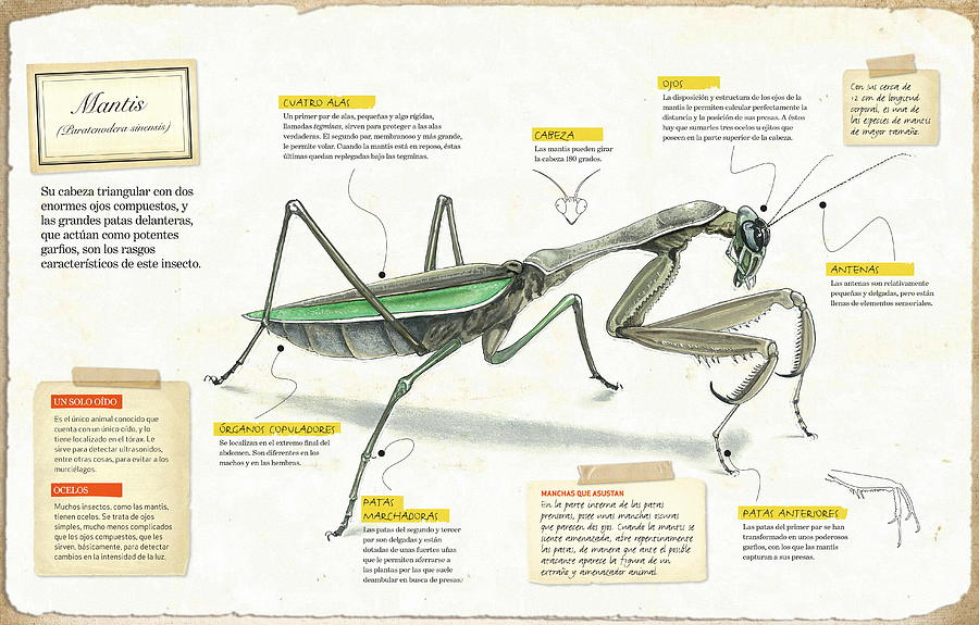 Mantis by Album