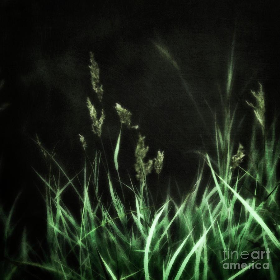 Midnight meadow by Priska Wettstein