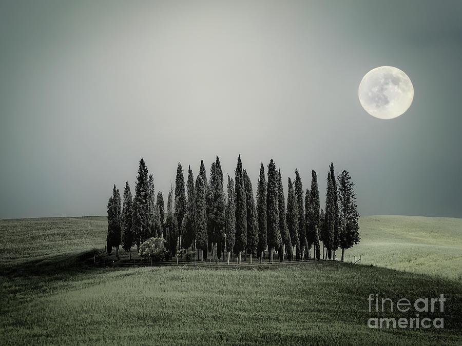 Moonlight Serenade Photograph