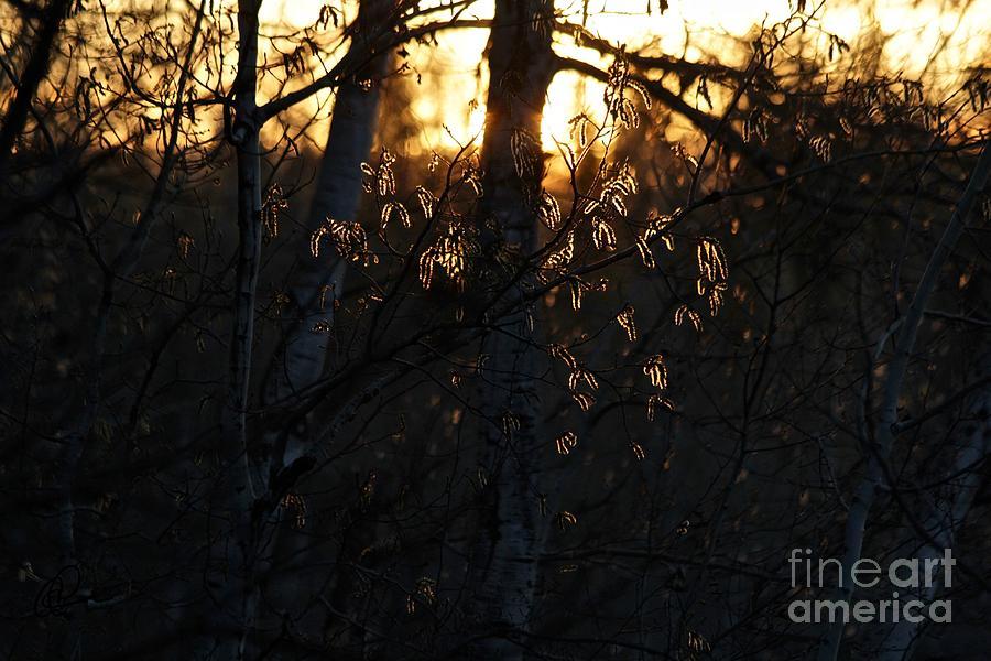 Morning Light by Ann E Robson