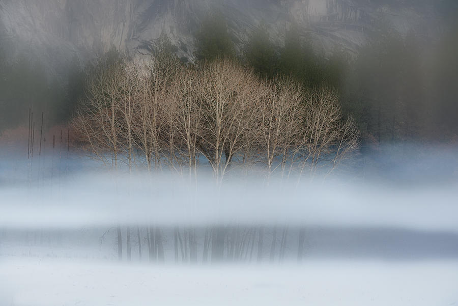 Naked aspens in the Yosemite fog by Alessandra RC