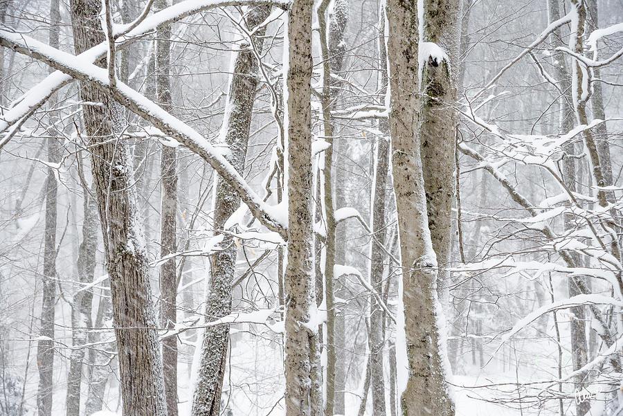 Natures Beauty Photograph
