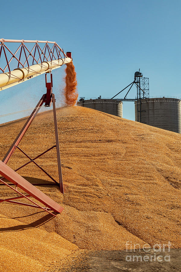 Nebraska Corn Harvest Photograph