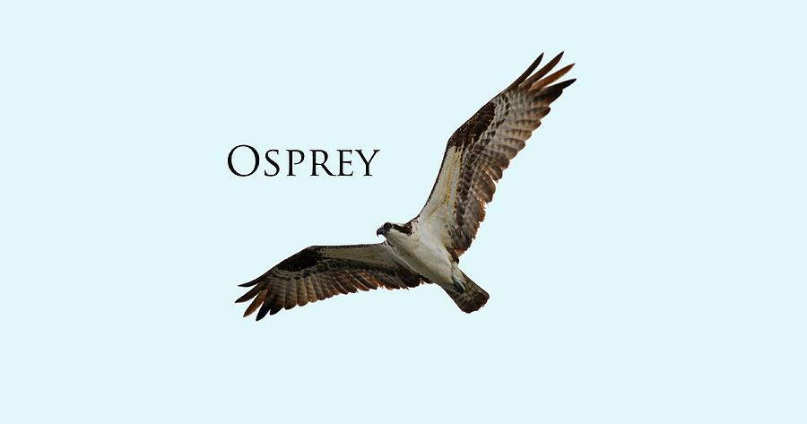 Osprey by Whispering Peaks Photography