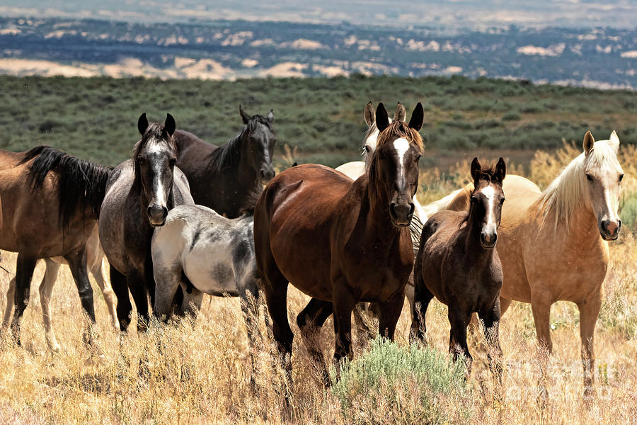 Our Gang by Jim Garrison