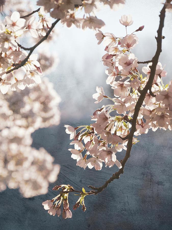 Blossom Digital Art - Painterly spring blossom by Rob Visser