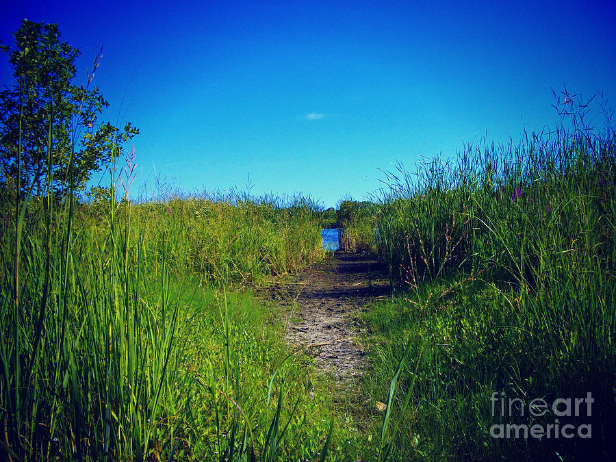 Wetlands Photograph - Pathway to Prairie Lake by Frank J Casella