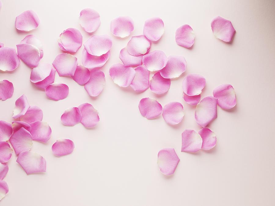 Pink rose petals Photograph by Martin Barraud