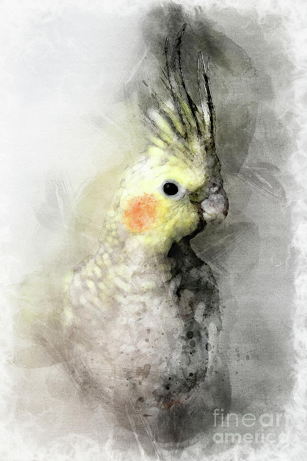 Bird Mixed Media - Portrait Of A Cockatiel by Gregory DUBUS