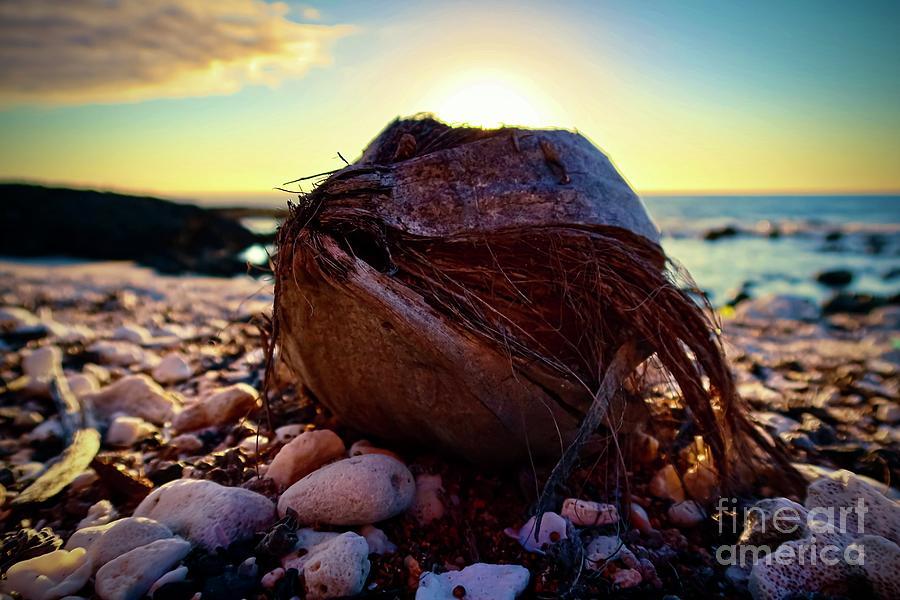 Put Da Sun In Da Coconut Photograph
