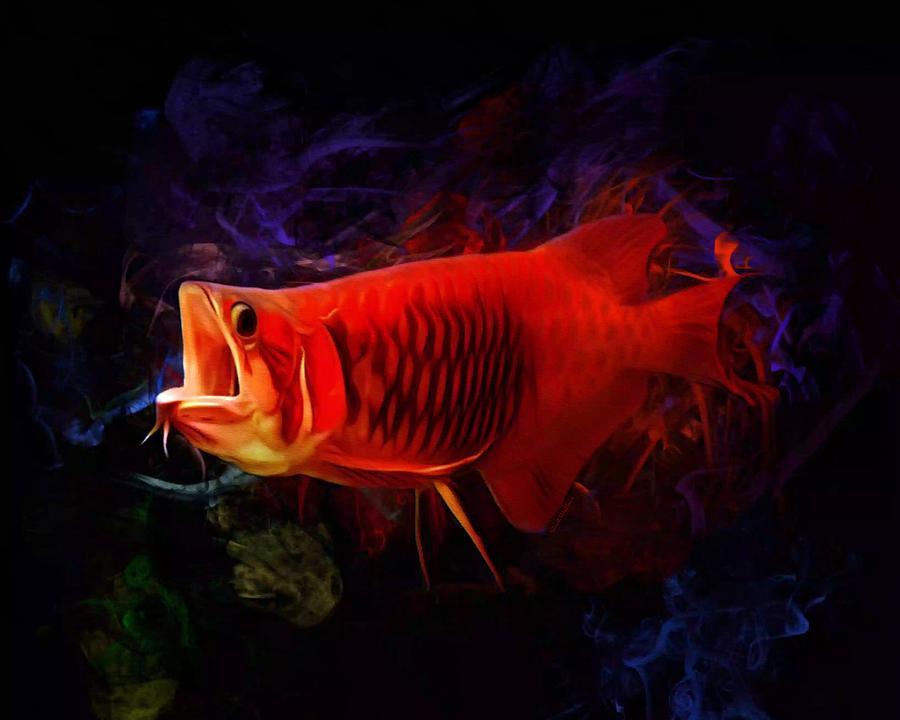 Red Digital Art - Red Asian Arowana Portrait by Scott Wallace Digital Designs