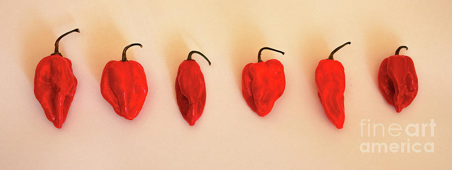 Red Peppers Photograph - Red Pepper by Felix Lai