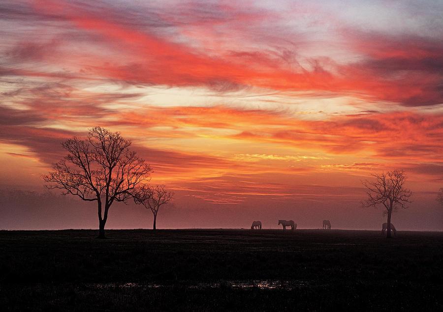 Red Sky Sunrise Photograph