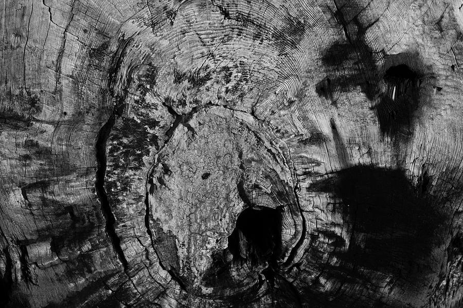 Tree Rings of Life by Yulia Kazansky